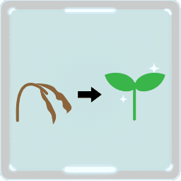 アルファルファ もやし 栽培 最強の野菜 名前と栄養 食べ方 イラストの描き方 4コママンガも